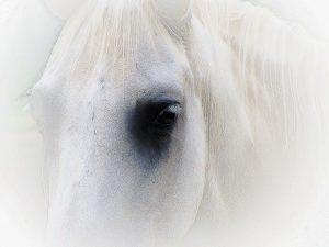 whitehorse...-1024x768