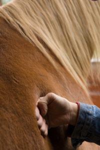 Barbara Breckenfeld equine massage